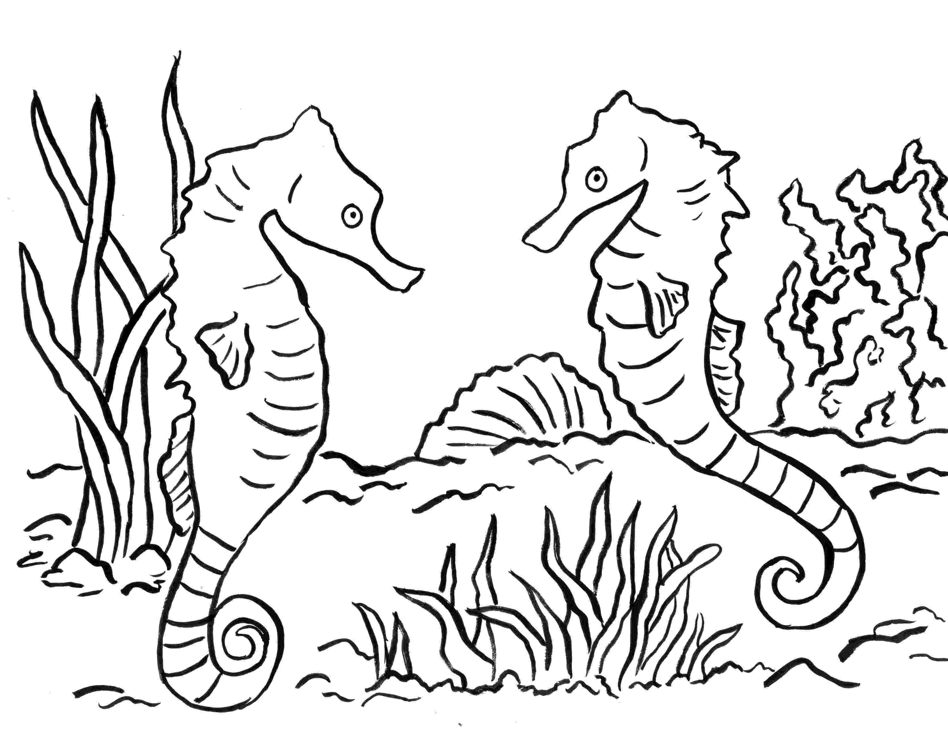 seahorses coloring pages seahorse coloring page samantha bell seahorses pages coloring