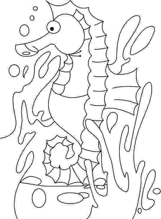 seahorses coloring pages seahorse coloring pages to download and print for free pages seahorses coloring