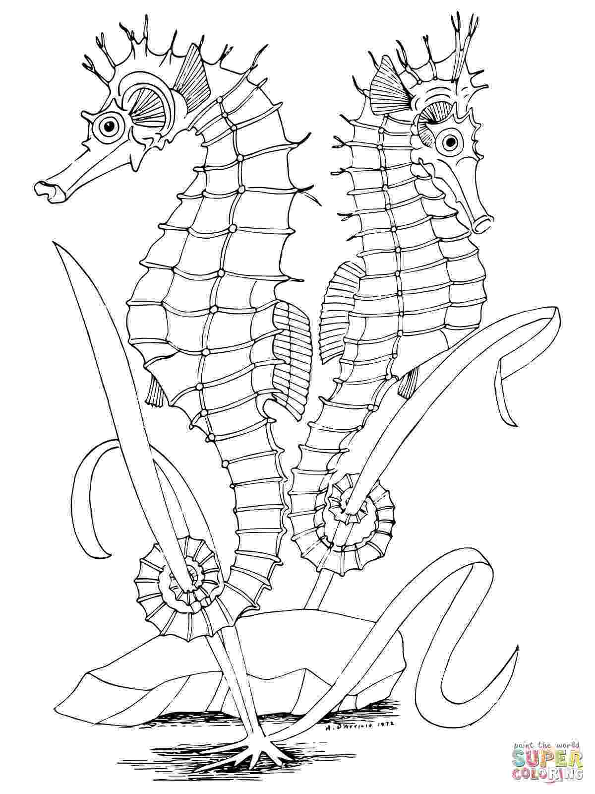 seahorses coloring pages two seahorses coloring page supercoloringcom seahorses coloring pages
