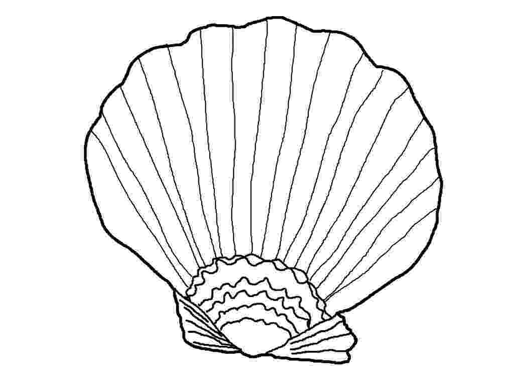 seashell coloring page 10 best images about coloring for grown ups on pinterest page coloring seashell