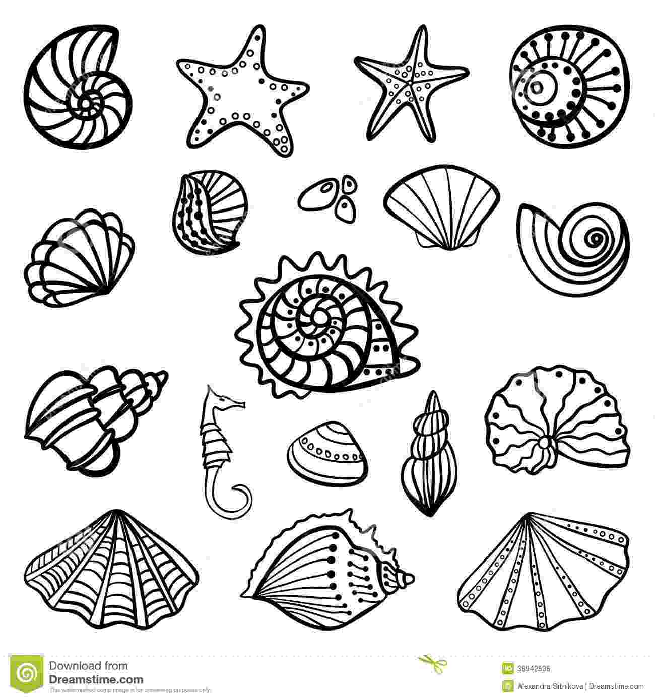 seashell coloring page beach shells coloring pages download and print for free coloring seashell page