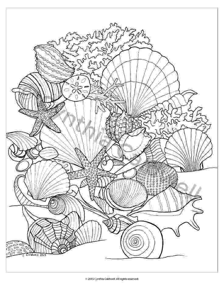seashell coloring page beach shells coloring pages download and print for free page seashell coloring