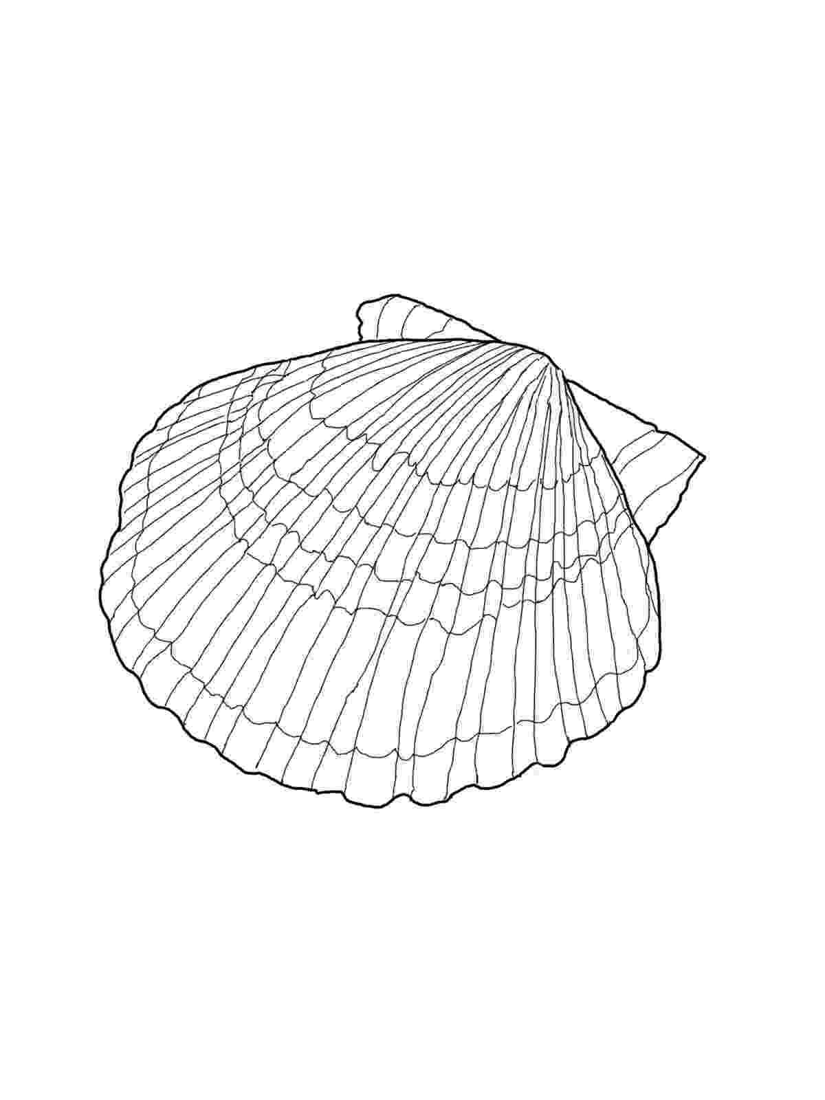 seashell coloring page free printable seashell coloring pages for kids page seashell coloring