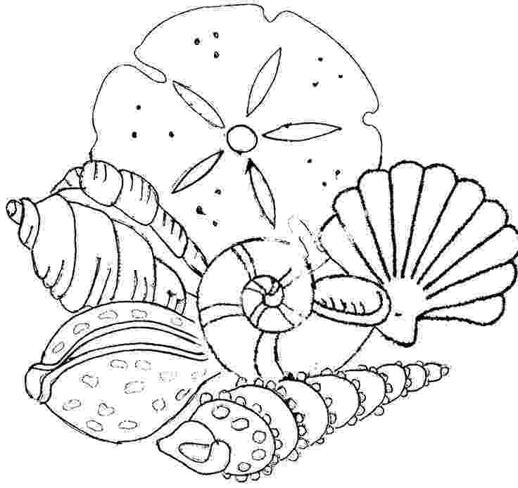 seashell coloring page seashell coloring pages to download and print for free coloring seashell page 1 1