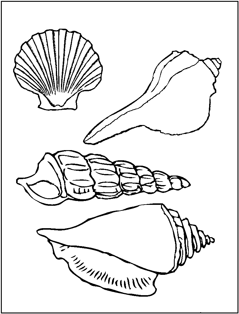 seashell coloring page seashell coloring pages to download and print for free seashell coloring page