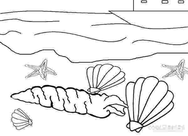 seashell coloring page seashells coloring pages coloring home coloring page seashell
