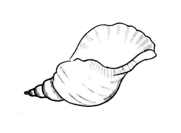 seashell coloring page seashells patterns sample colouring pages free from seashell coloring page