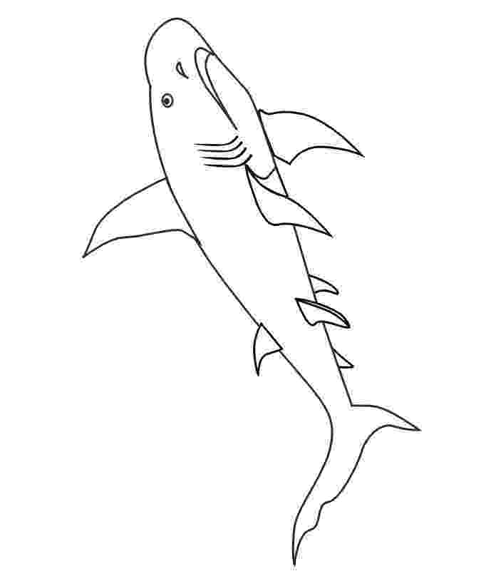 shark coloring sheet funny shark drawing at getdrawingscom free for personal shark sheet coloring
