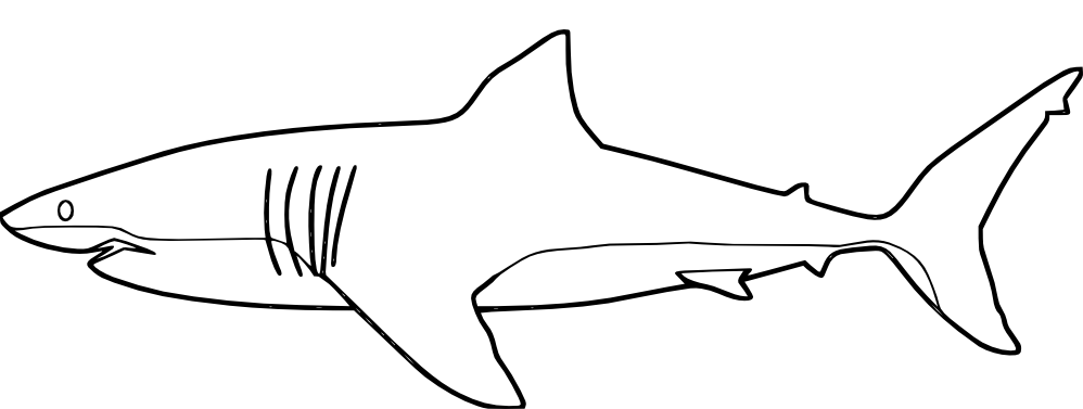 shark pictures to colour coloring pages shark coloring pages free and printable shark colour pictures to