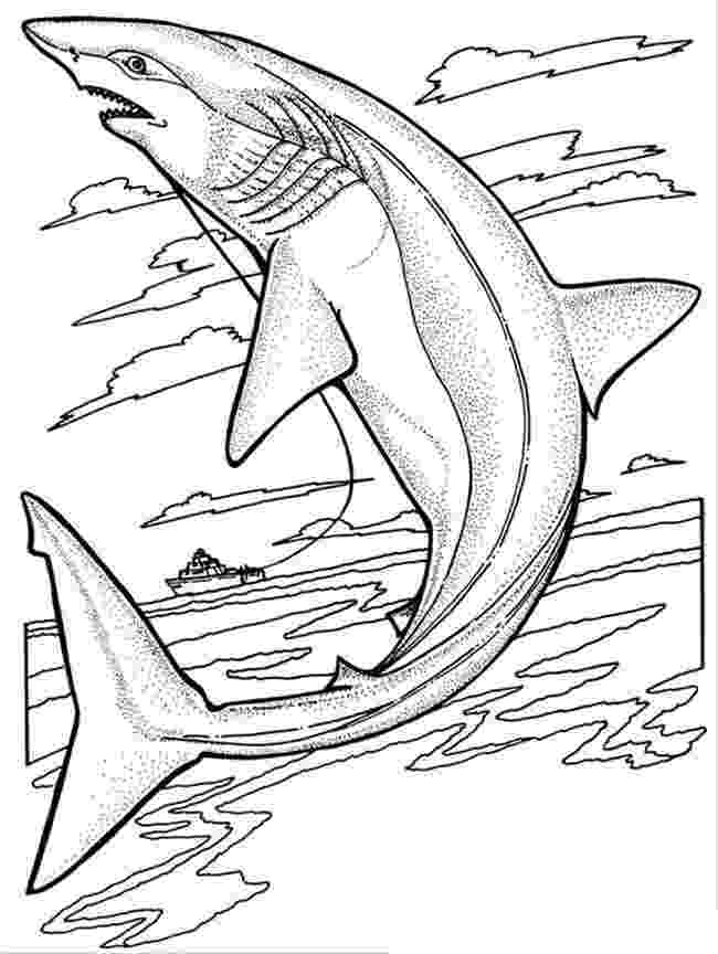 shark pictures to colour free printable shark coloring pages for kids pictures colour to shark