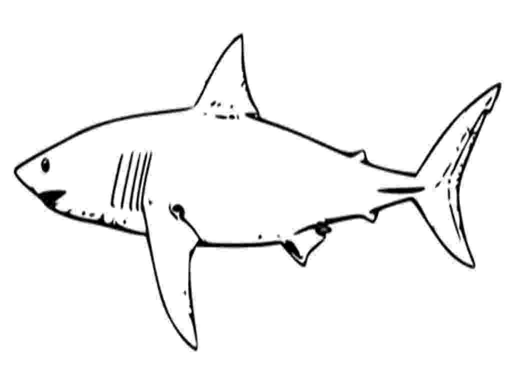 shark printables free printable shark coloring pages for kids printables shark 1 1