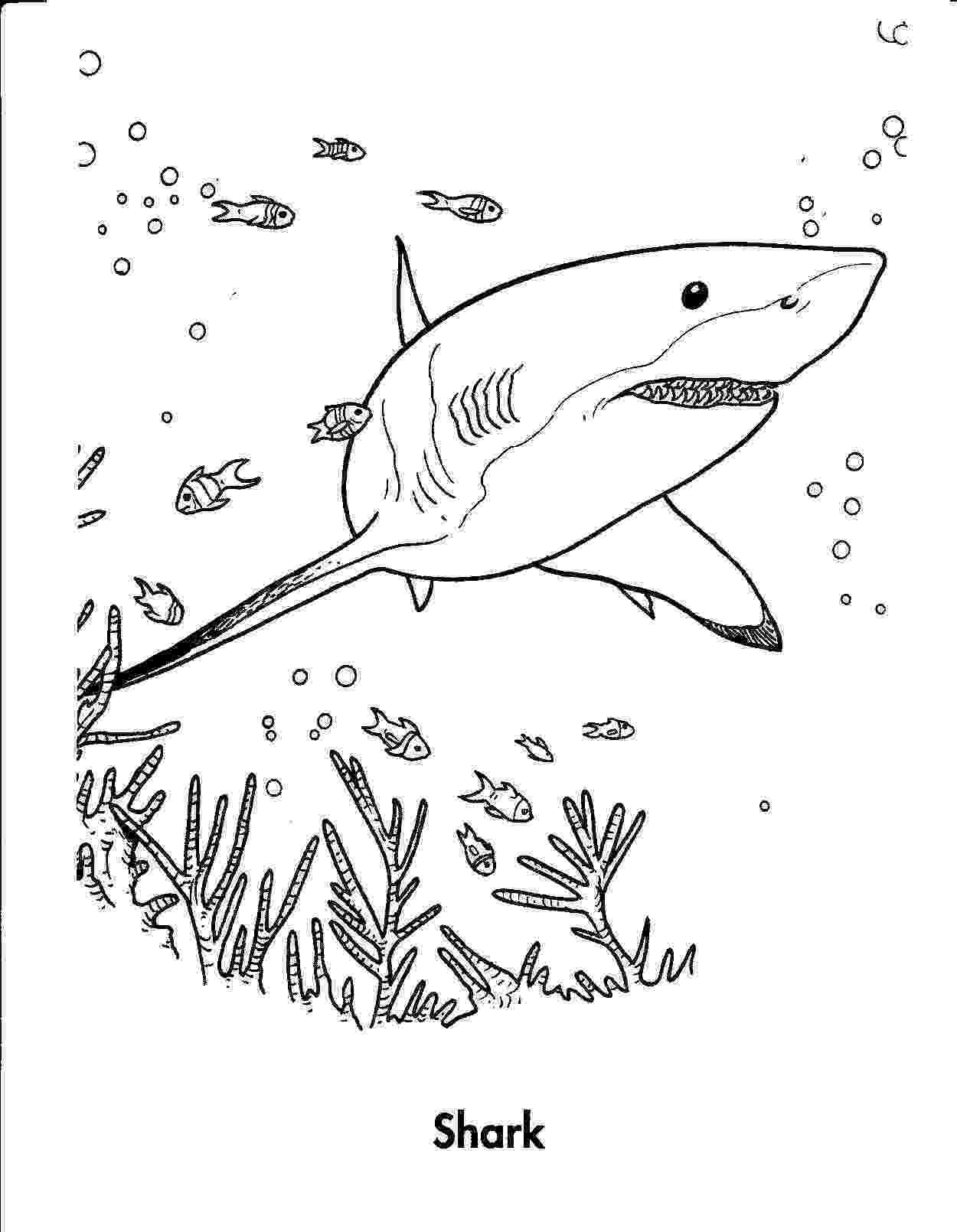 shark printables free printable shark coloring pages for kids printables shark 1 2