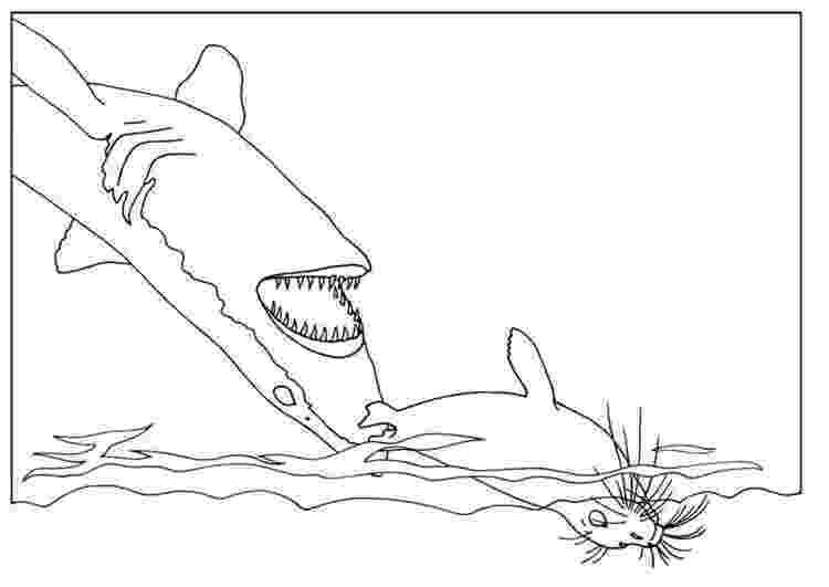 shark printables free printable shark coloring pages for kids printables shark 1 4