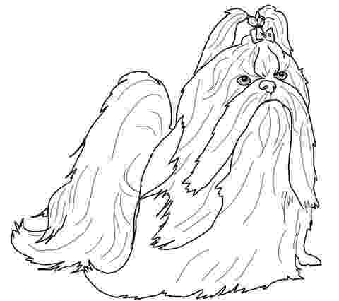 shih tzu coloring pages the best free shih drawing images download from 58 free pages coloring tzu shih