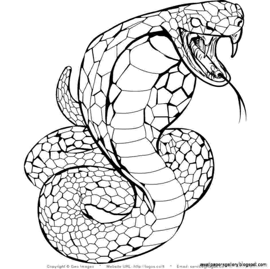 snake colouring picture snake coloring pages free for children snake colouring picture