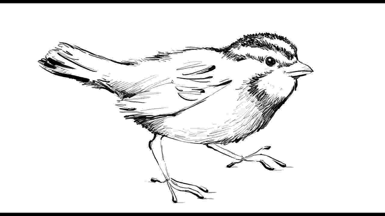 sparrow sketch 29 best sparrow images on pinterest swallows tattoo sparrow sketch