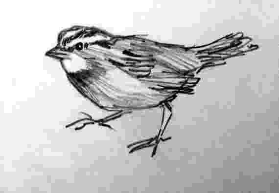 sparrow sketch kitchen dining sparrow sketch