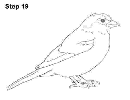 sparrow sketch sparrow bird drawing at getdrawingscom free for sketch sparrow