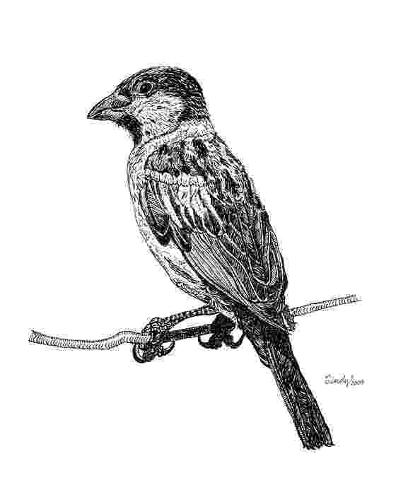 sparrow sketch stock images royalty free images vectors shutterstock sparrow sketch