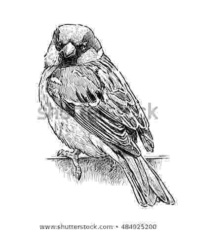 sparrow sketch tattoos expert sparrow tattoos designs and meaning sketch sparrow