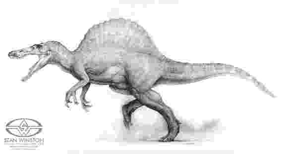 spinosaurus pictures being but men we walked into the trees spinosaurus pictures