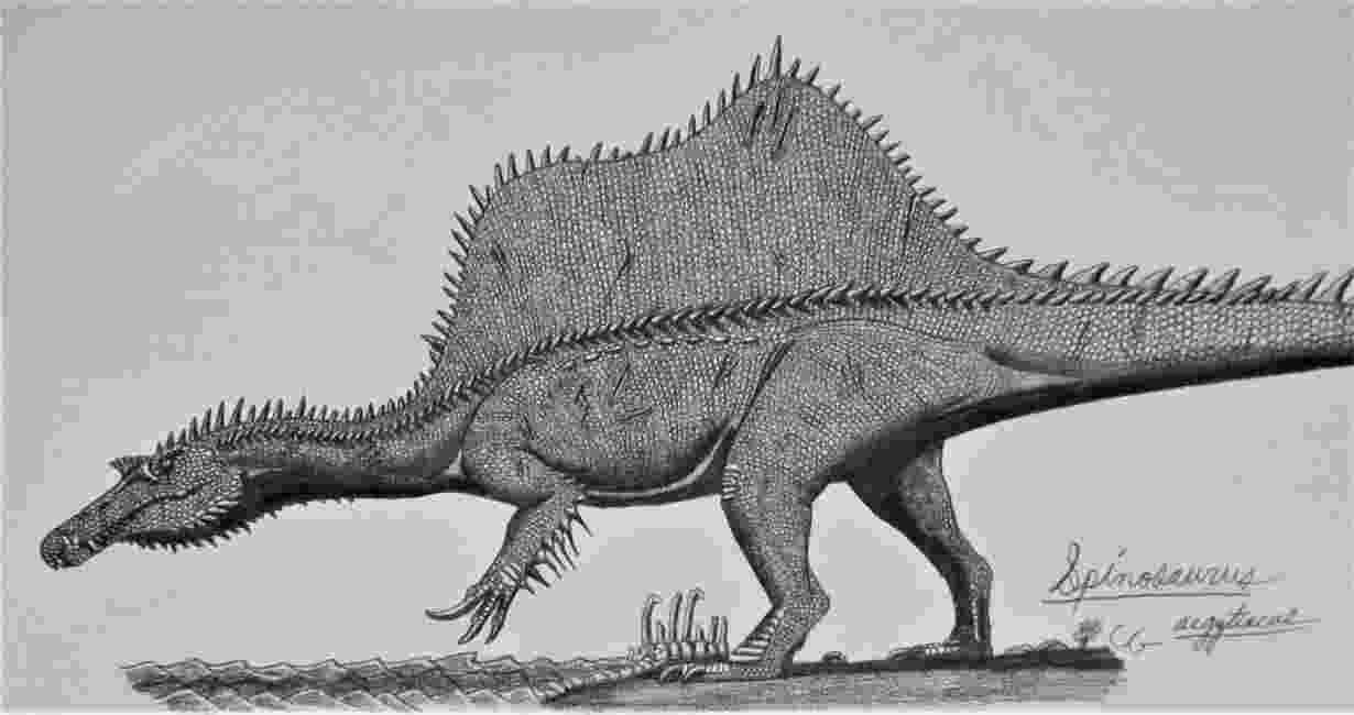 spinosaurus pictures spinosauridae paleontology wiki fandom powered by wikia pictures spinosaurus