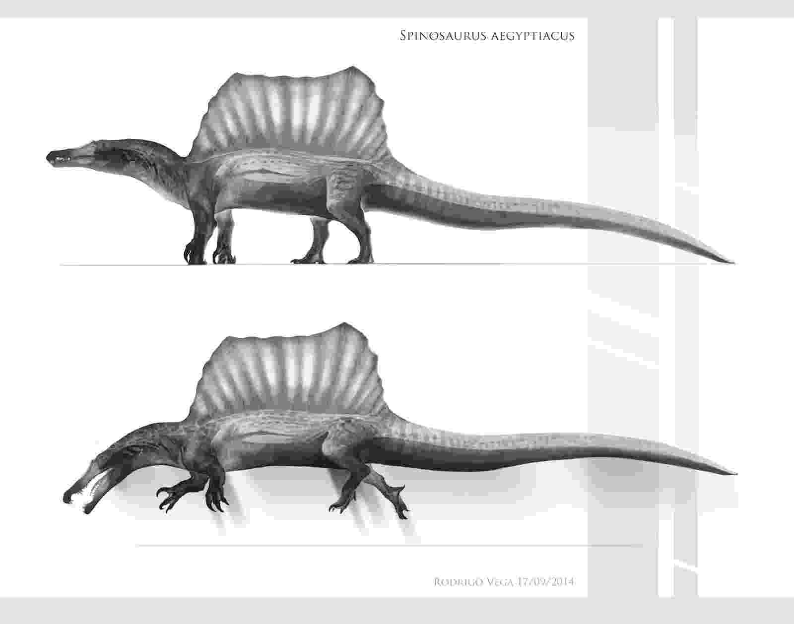 spinosaurus pictures spinosaurus aegyptiacus pictorial dinosaur archives pictures spinosaurus