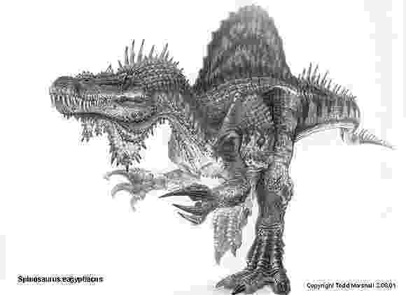 spinosaurus pictures spinosaurus the first aquatic dinosaur all you need is spinosaurus pictures