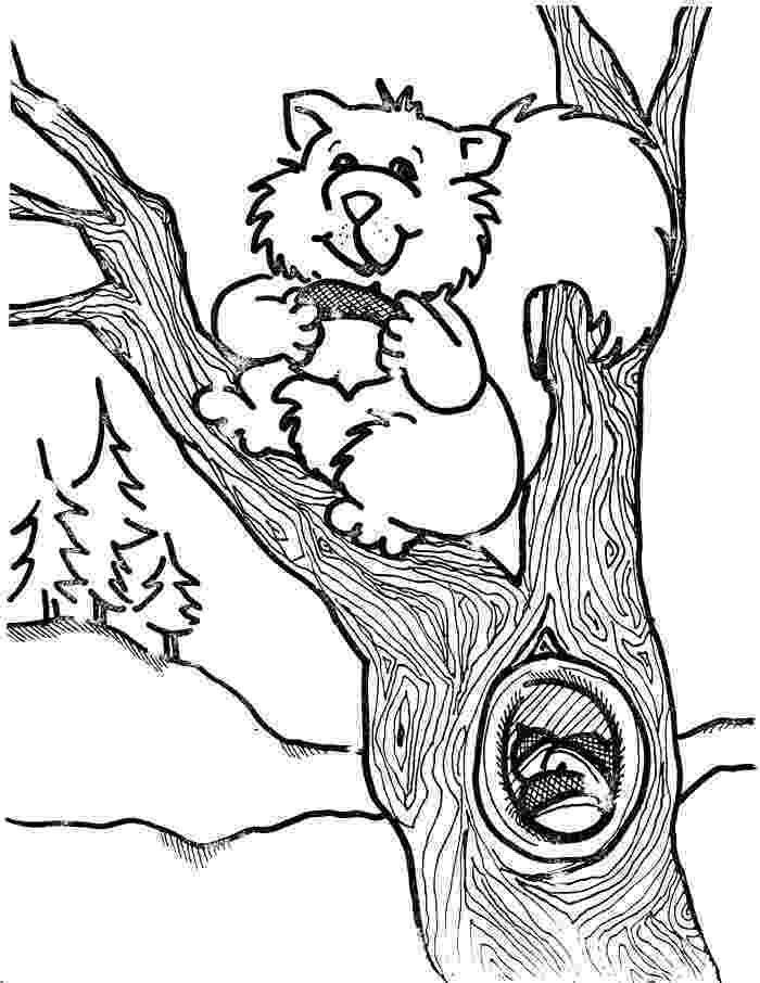 squirrel coloring page free printable squirrel coloring pages for kids animal place coloring page squirrel