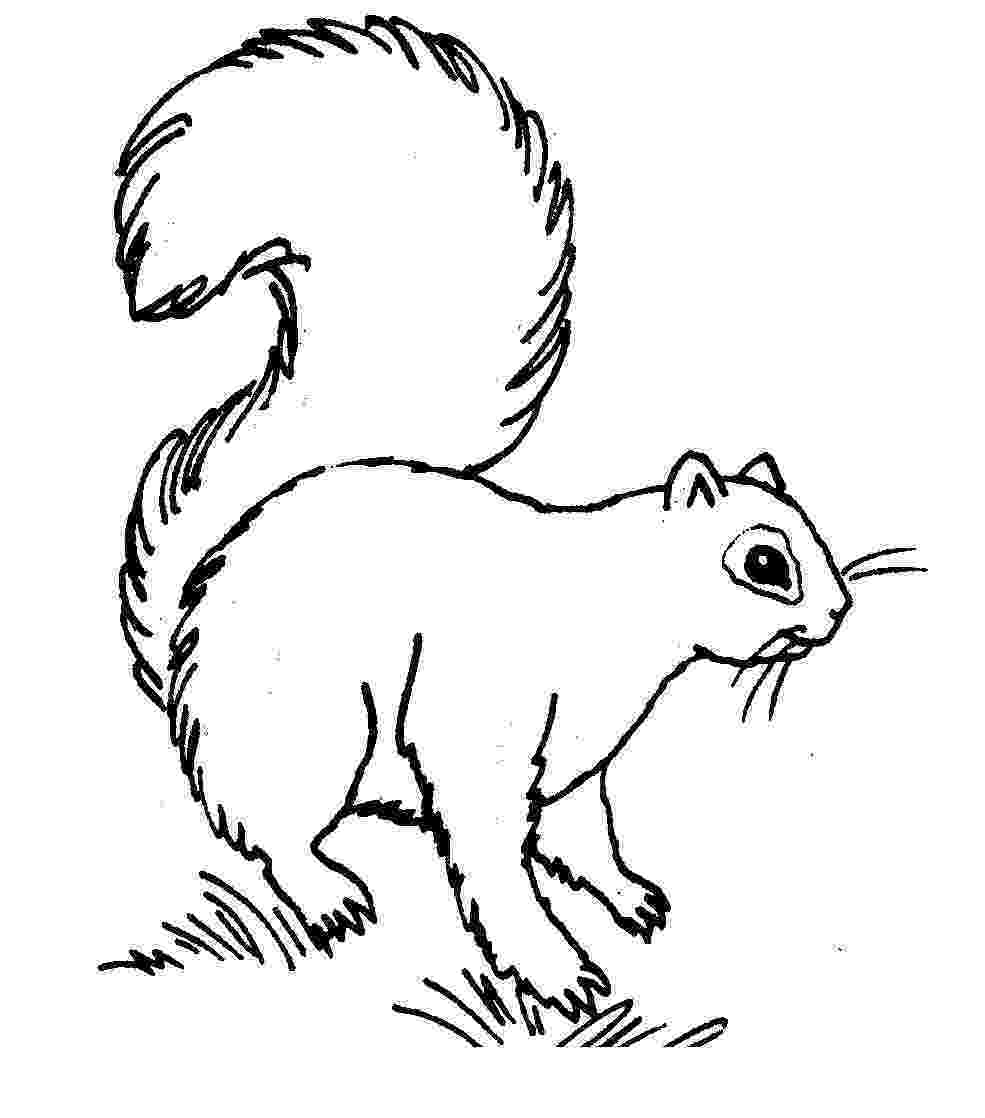 squirrel coloring page free printable squirrel coloring pages for kids animal place squirrel page coloring