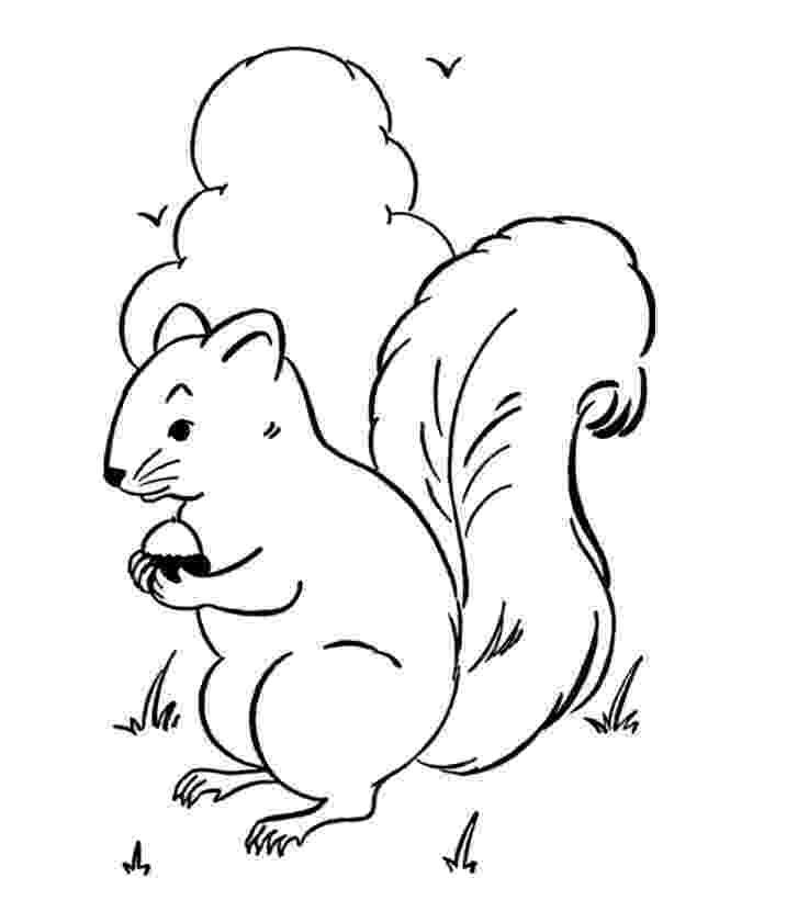 squirrel coloring page free squirrel coloring pages coloring page squirrel