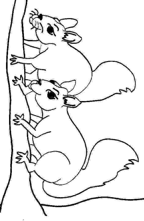 squirrel coloring page free squirrel pictures to print download free clip art coloring page squirrel 1 1