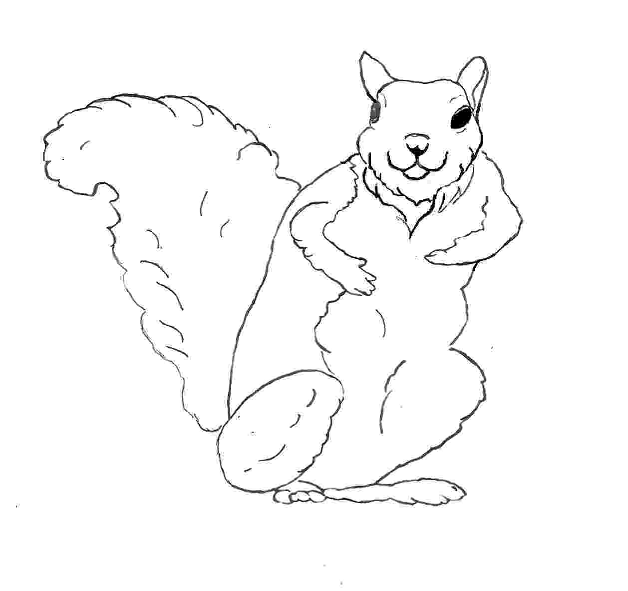 squirrel coloring page print and color for afternoon fun page coloring squirrel