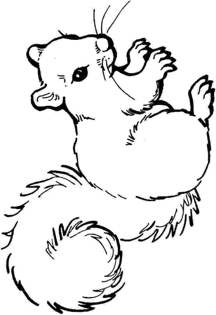 squirrel coloring page squirrel coloring page clipart panda free clipart images squirrel coloring page