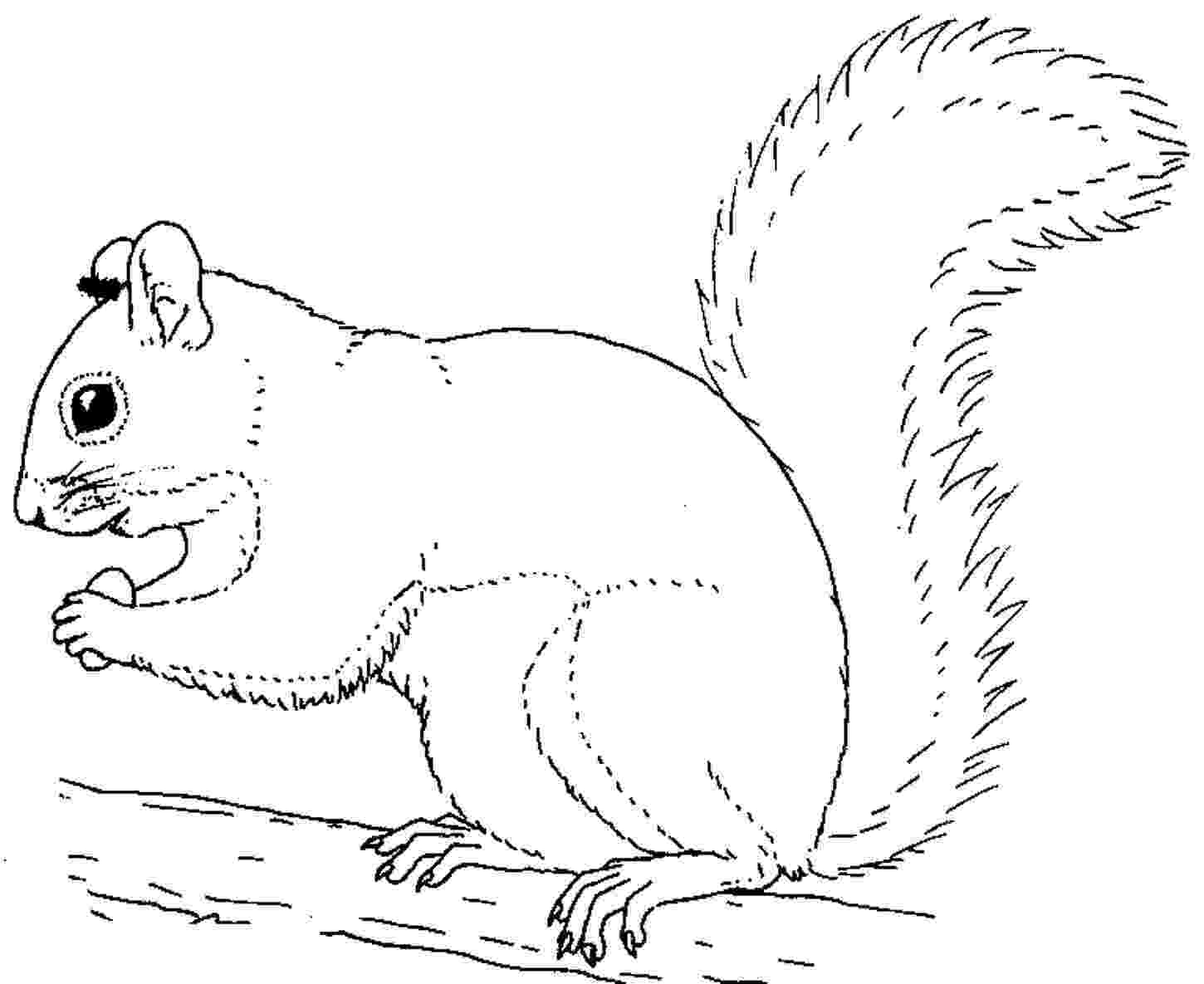 squirrel coloring page squirrel coloring pages to download and print for free squirrel page coloring