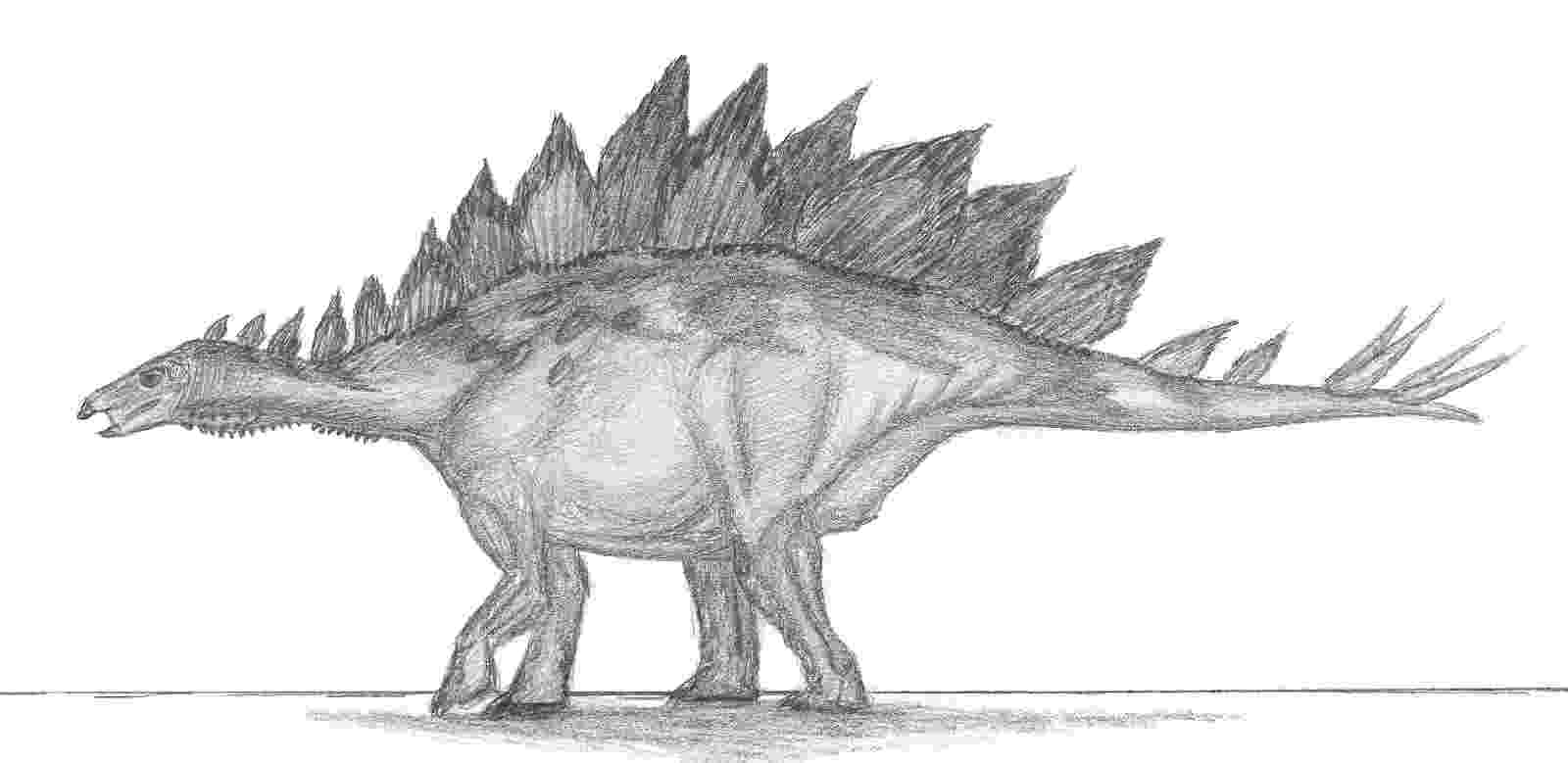 stegosaurus pictures art evolved life39s time capsule january 2013 stegosaurus pictures 1 1
