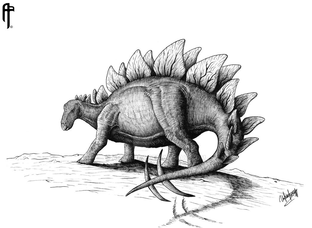 stegosaurus pictures stegosaurus coloring page free clip art pictures stegosaurus