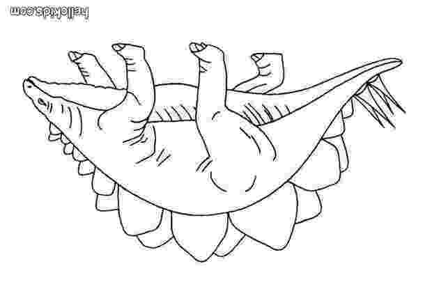 stegosaurus pictures stegosaurus coloring pages printable get coloring pages stegosaurus pictures
