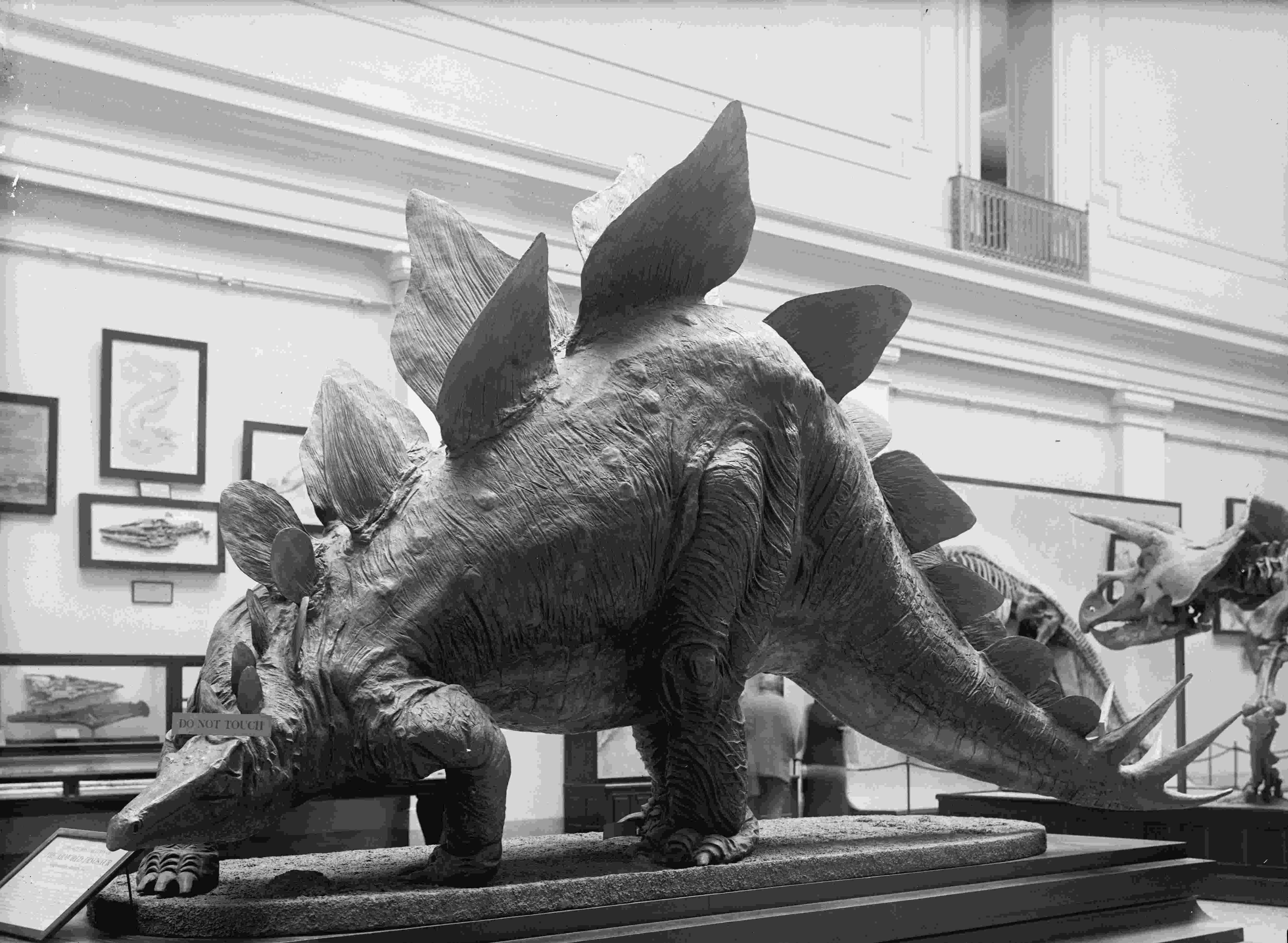 stegosaurus pictures stegosaurus dinosaur genus britannicacom pictures stegosaurus