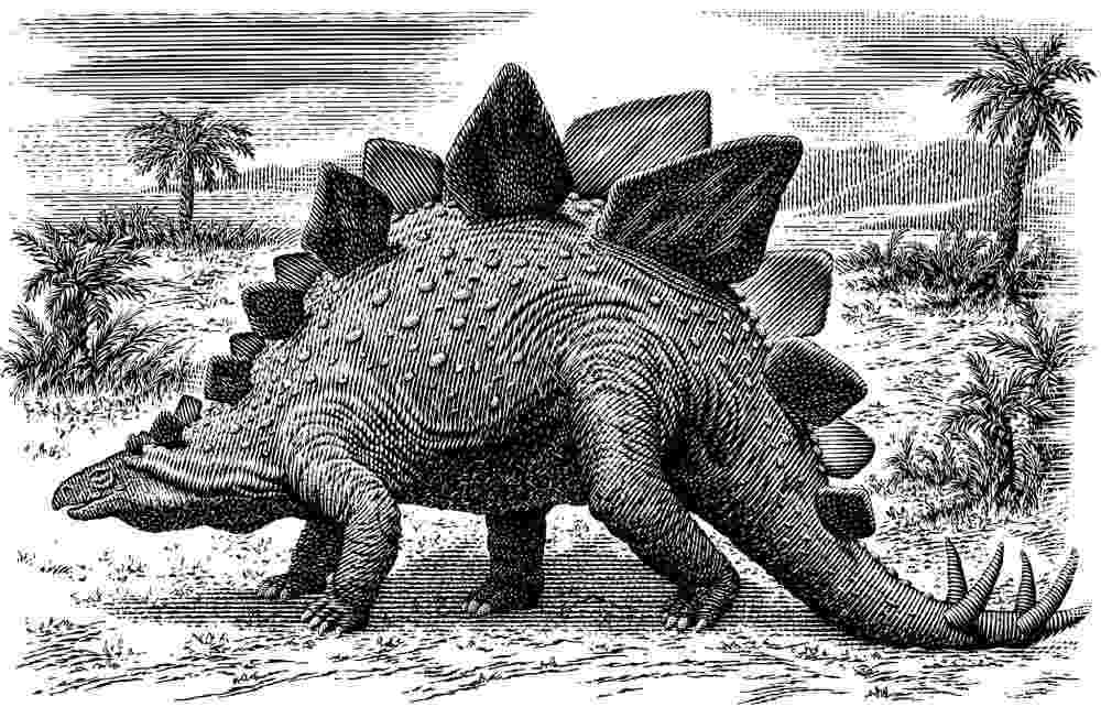 stegosaurus pictures test 3 geology 106 with yancey at texas am university stegosaurus pictures