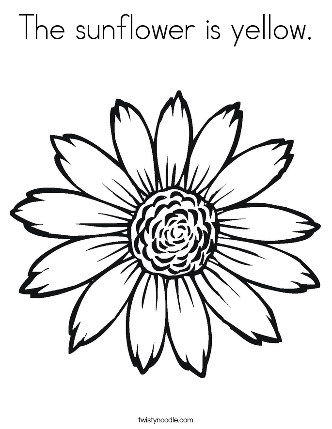 sunflower for coloring sunflower coloring pages the sunflower is yellow for coloring sunflower