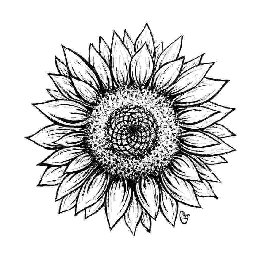 sunflower sketch a sunflowers beauty drawing by patricia hiltz sunflower sketch
