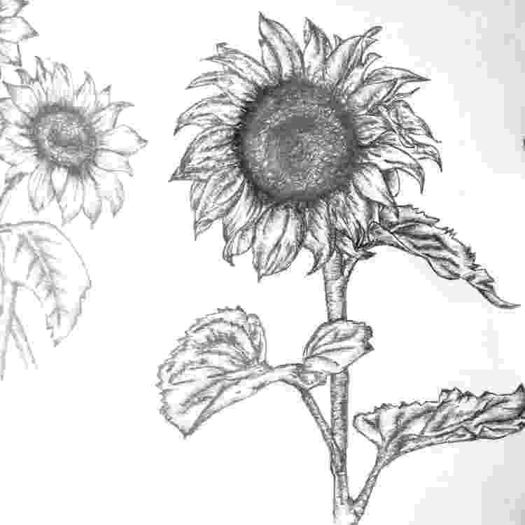 sunflower sketch brushstrokes etc june 2008 sunflower sketch