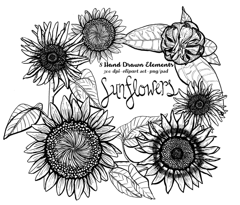 sunflower sketch sunflower line drawing sunflower sketch
