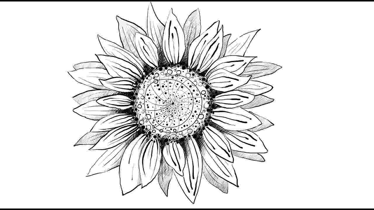 sunflower sketch sunflower sketch by stefanogemi on deviantart sunflower sketch