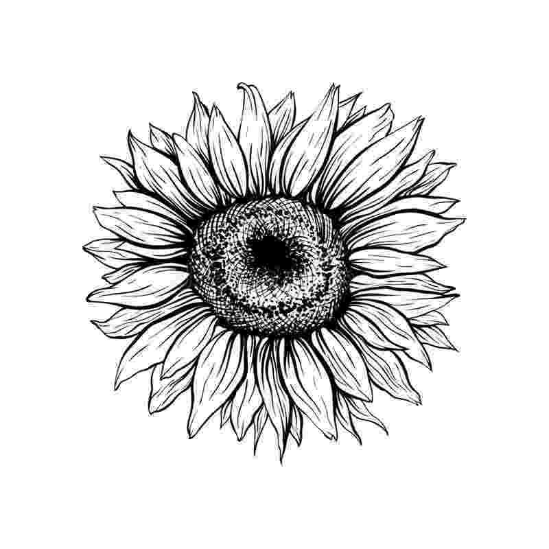 sunflower sketch wtf dotwork tattoo photo tattoos pinterest style sunflower sketch