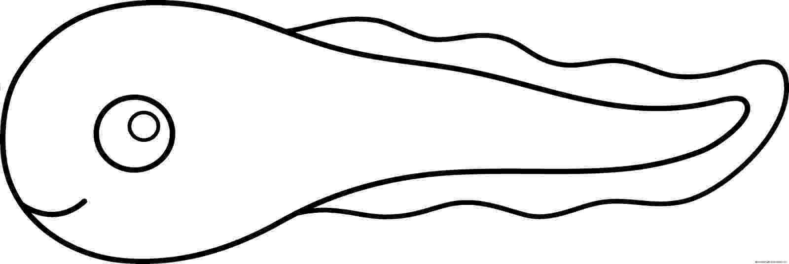 tadpole coloring pages tadpole coloring page supercoloringcom coloring pages tadpole