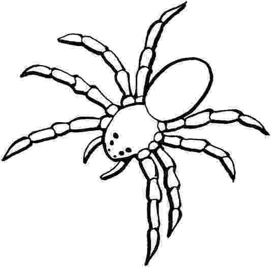 tarantula coloring page giant tarantula spider coloring sheet coloring tarantula page