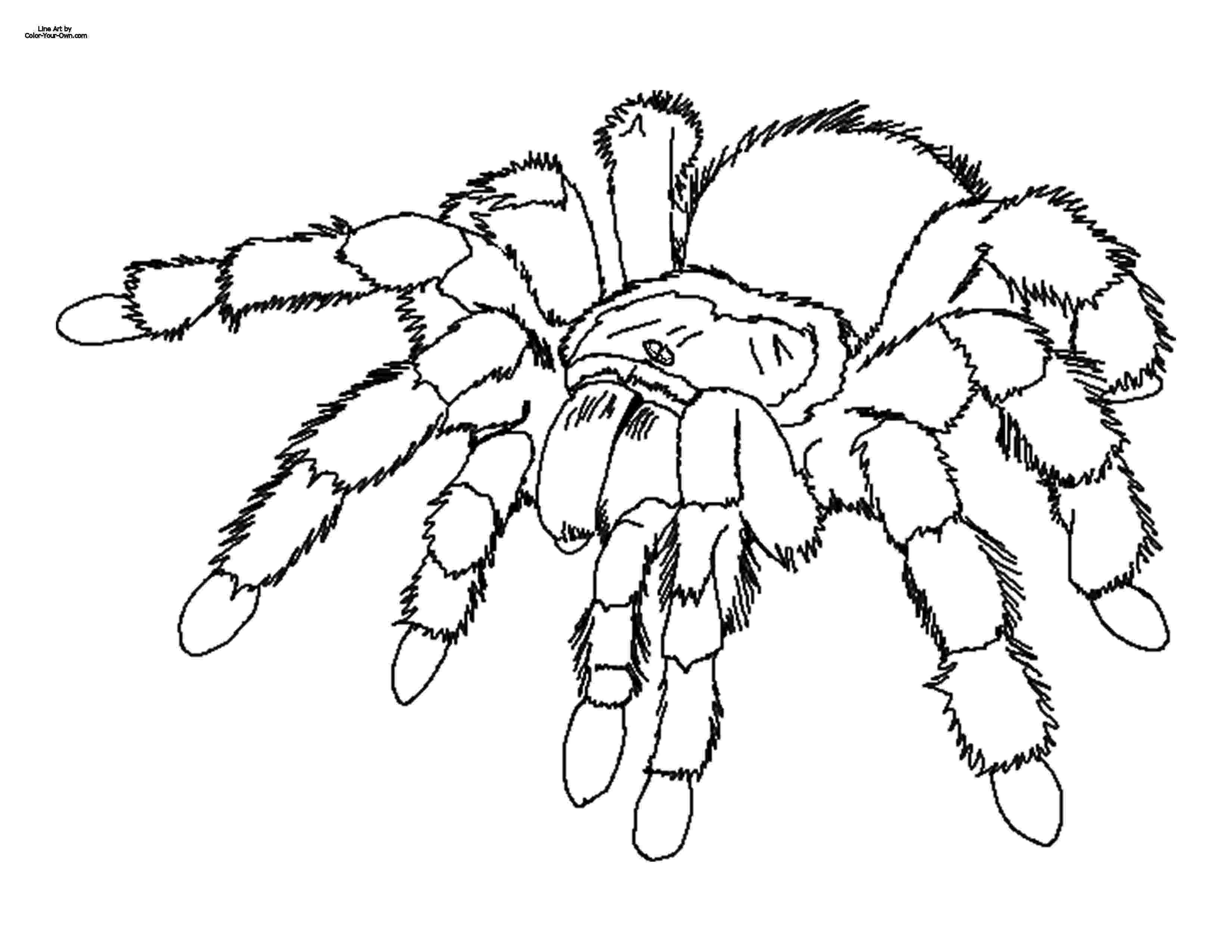 tarantula coloring page giant tarantula spider coloring sheet page tarantula coloring