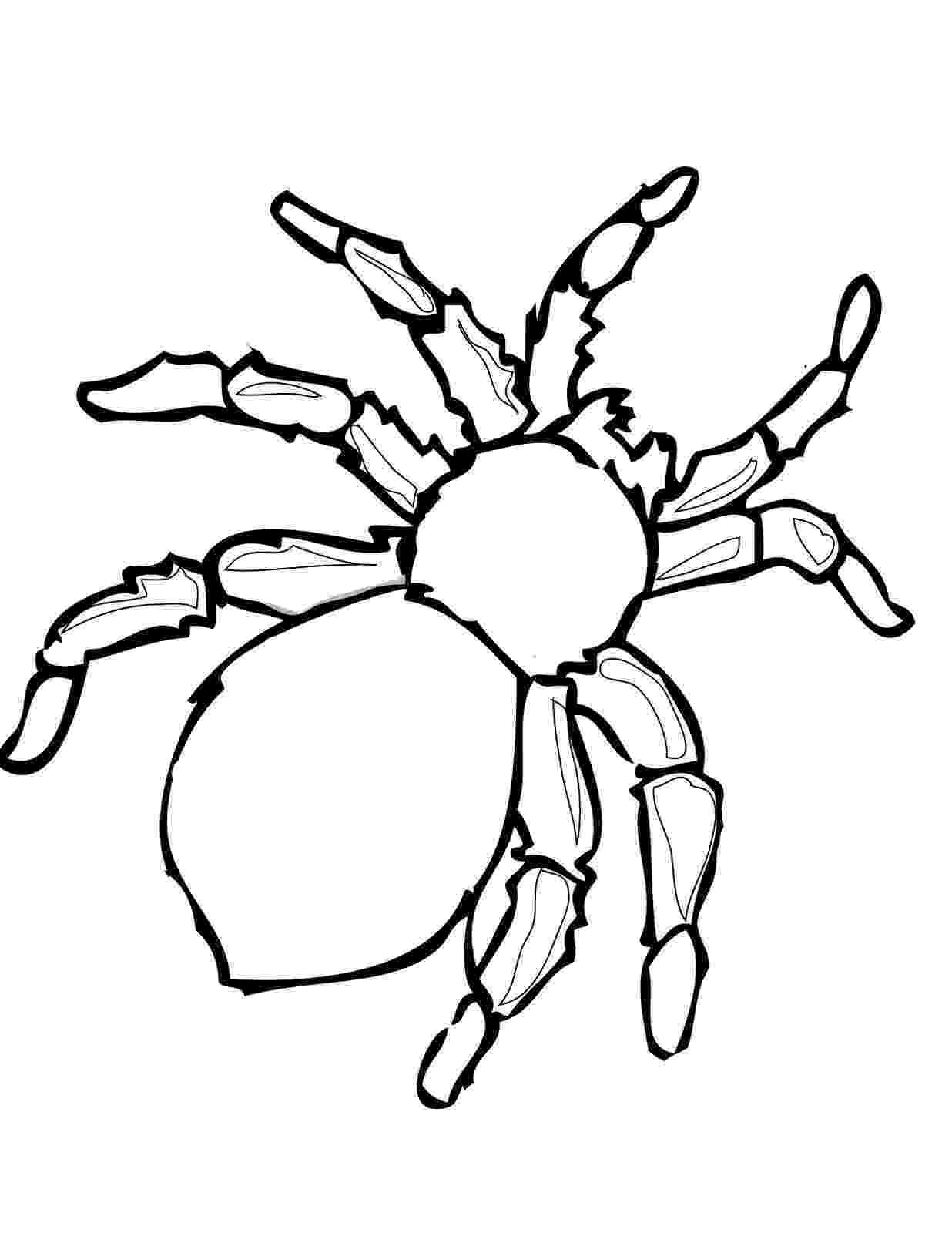 tarantula coloring page goliath tarantula coloring page free printable coloring tarantula page coloring